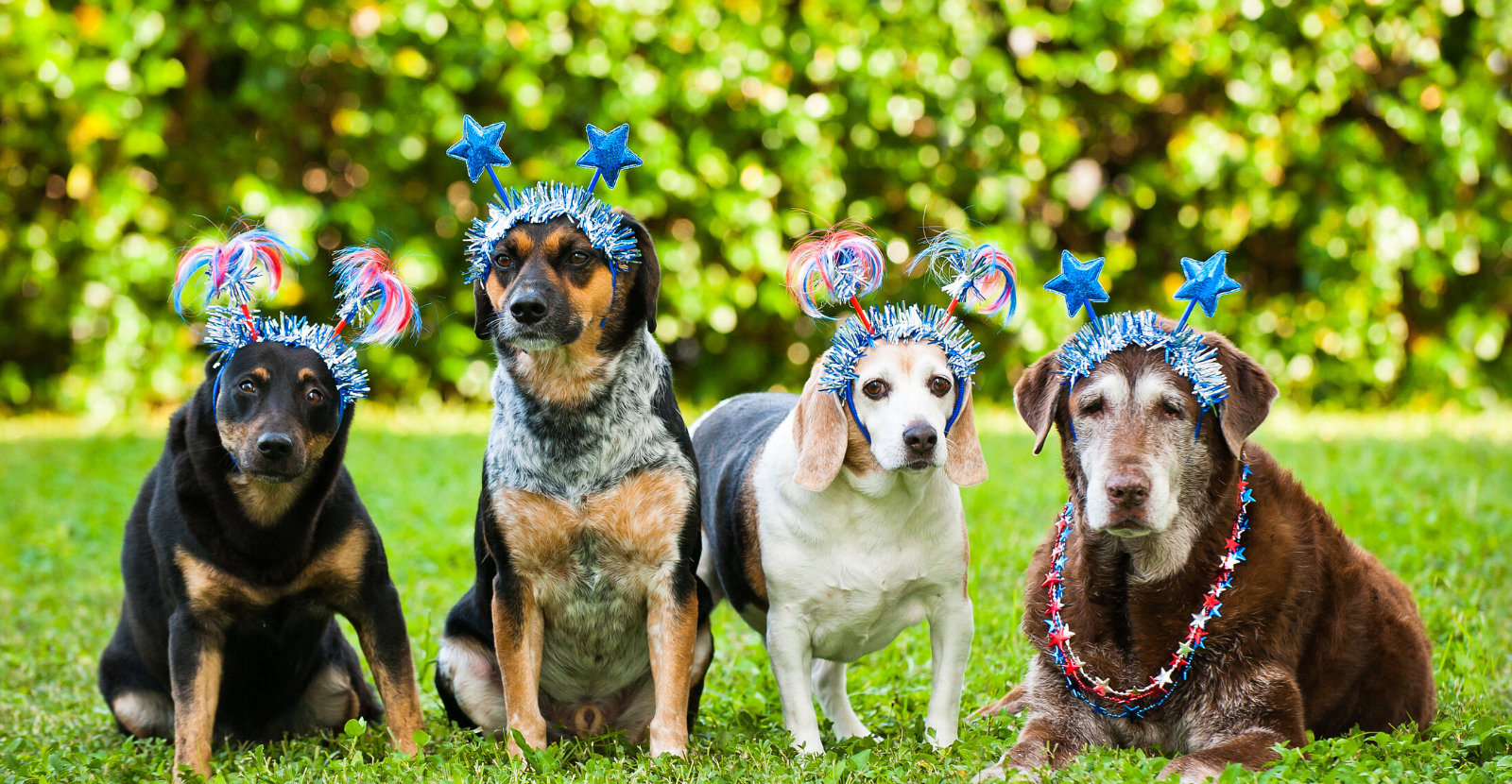 4 Ways to Keep Your Dogs Safe this Fourth of July