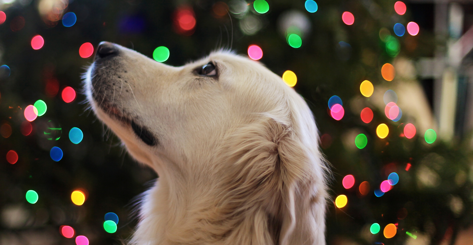 5 Tips for Safe Holiday Travel with Your Pet