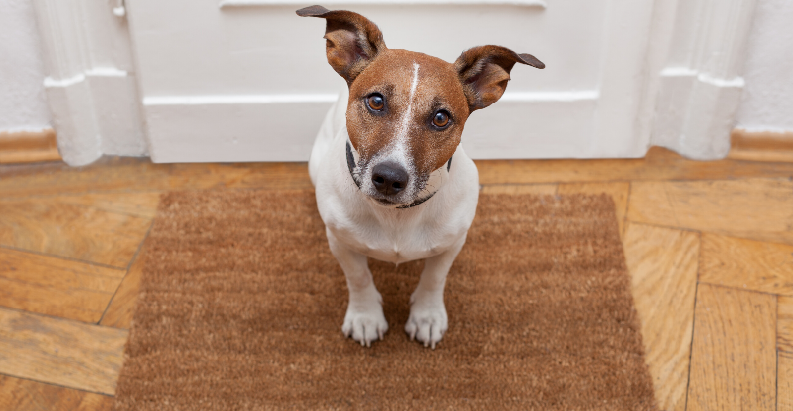 5 Tips on Staging Your Home So Buyers Don't Know You Have a Dog