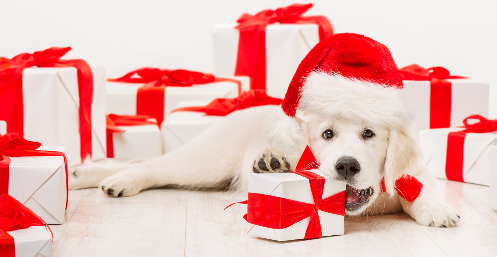 It's a Wrap: Our Most Popular Pet Health Blog Posts of 2019
