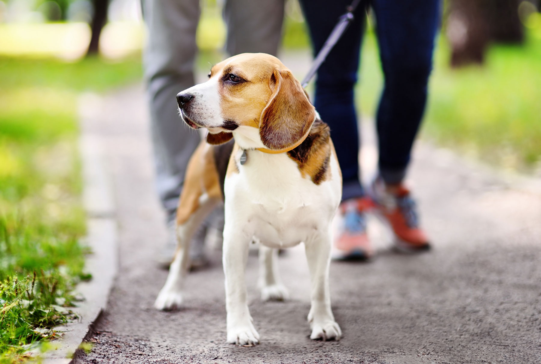 January is Walk Your Dog Month!