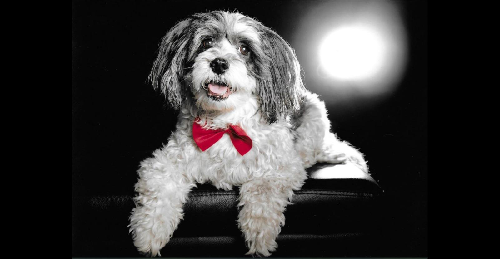 Glyde Helps Senior Dog Jericho Act Like a Puppy Again