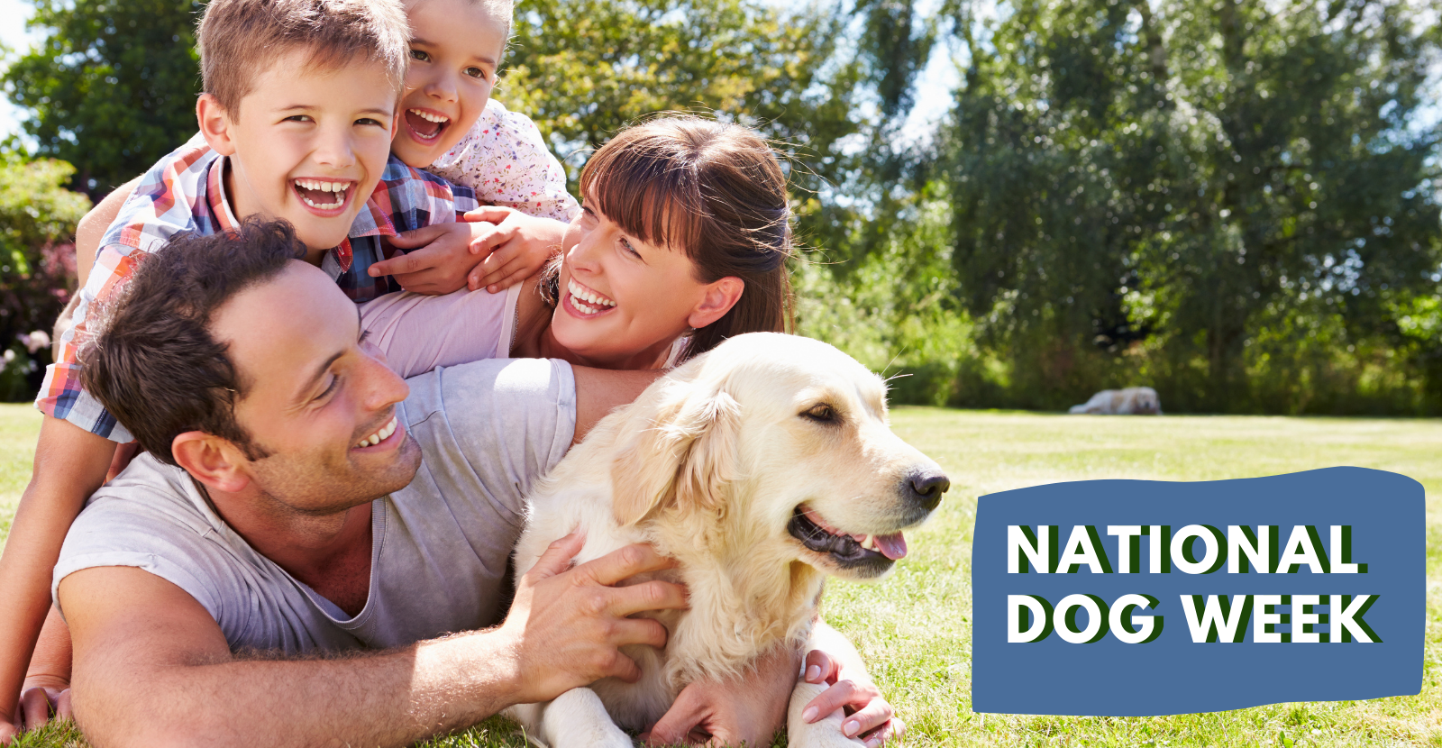 Celebrate National Dog Week with Happy Healthy Dogs