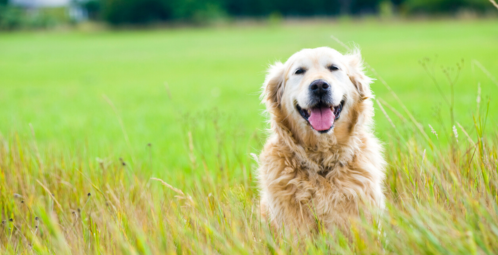 14 of the Most Lovable Dog Breeds