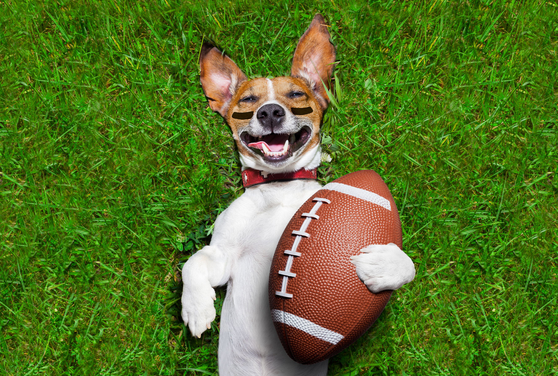 Fur-Friendly Ways to Enjoy Sunday's Big Game