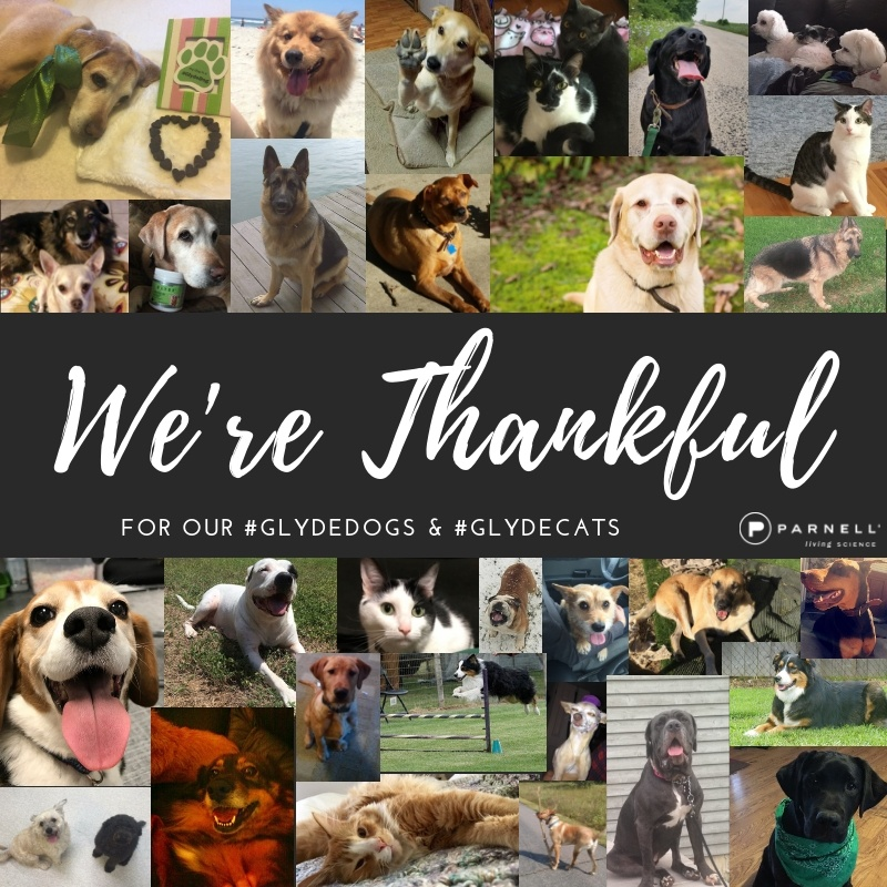 We're Thankful!