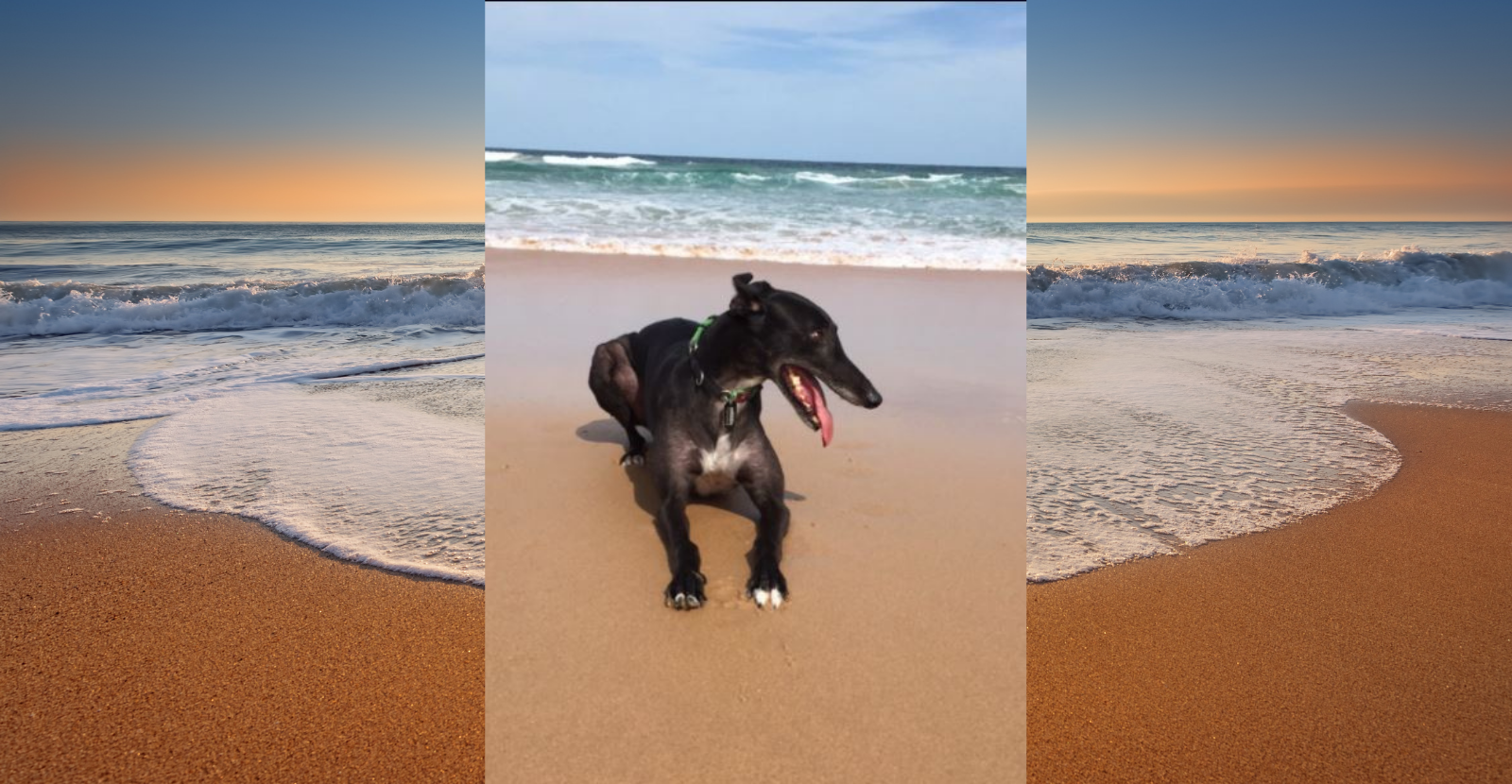 Wilson the Greyhound's Mum: I Highly Recommend Glyde!