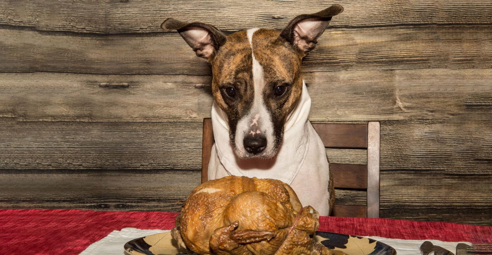 Thanksgiving Feast: What Your Dog Can & Can't Have