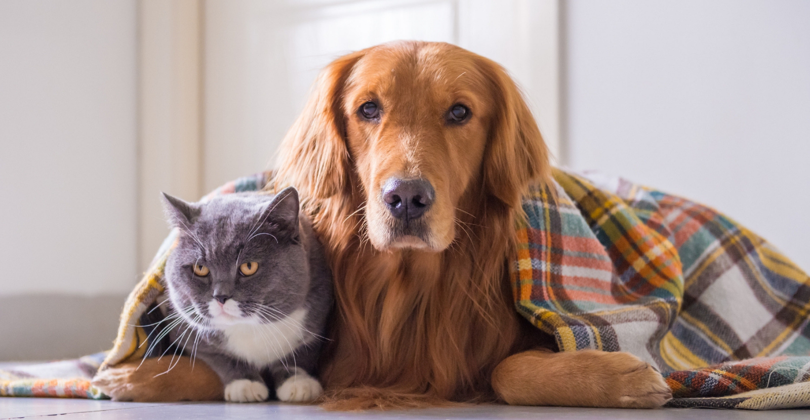 5 Cooler Weather Pet Health Tips [Infographic]