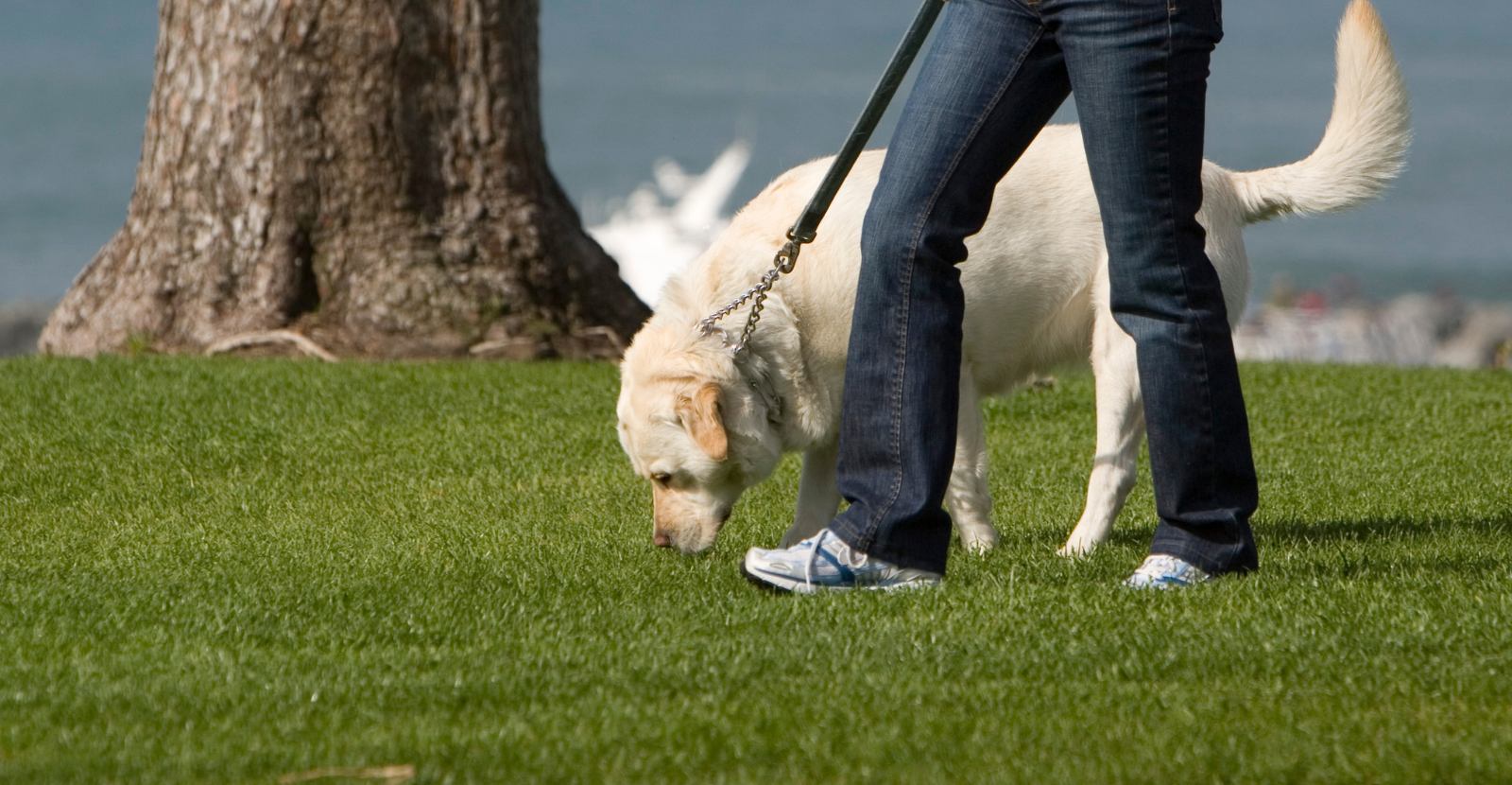Active Dog Month: Keys to Walking Your Dog