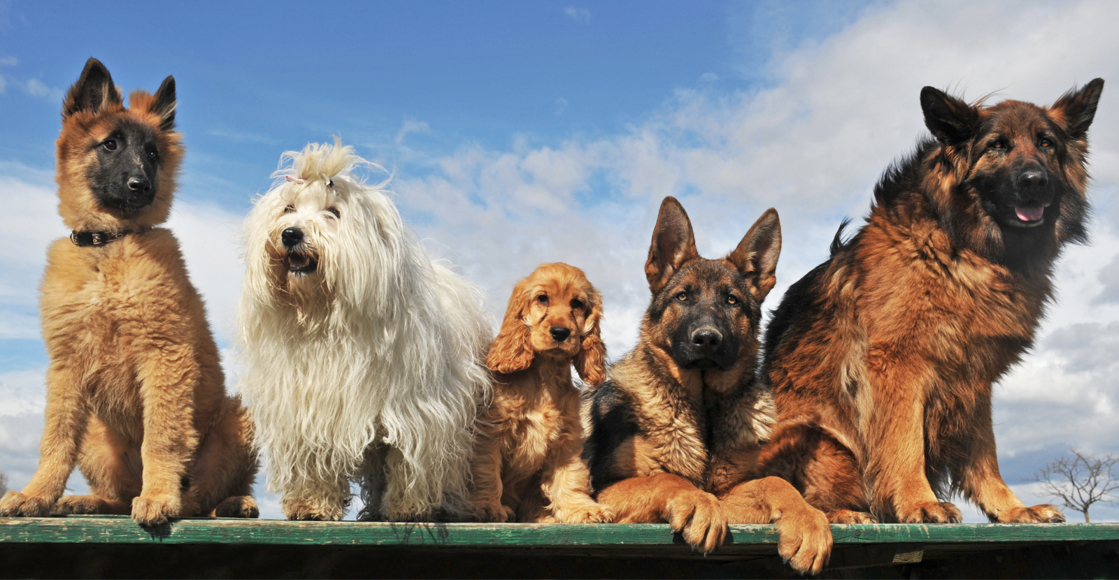 Mixed Breeds: Beautiful, Unusual and At Risk for Arthritis