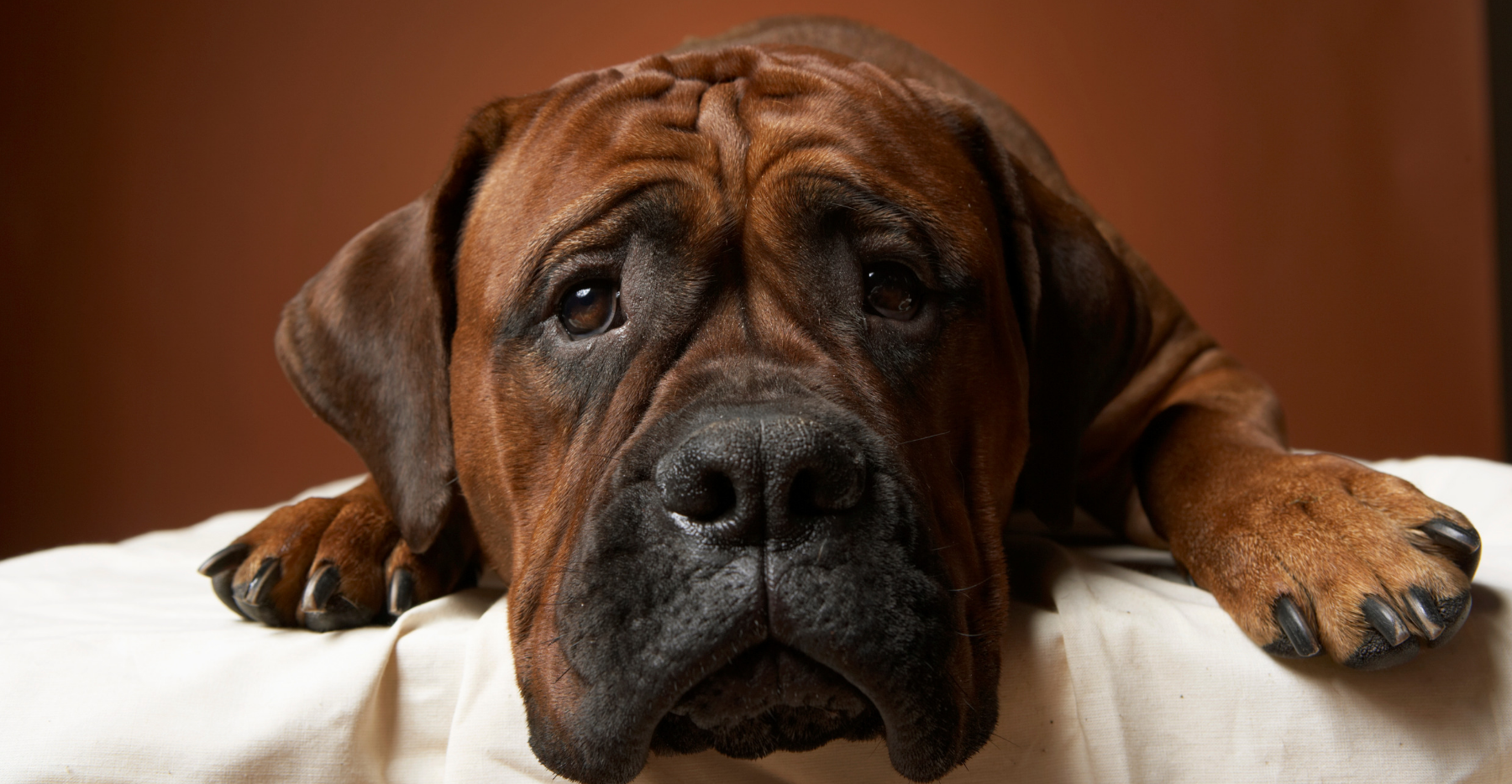 Animal Pain Awareness Month: What You Need to Know