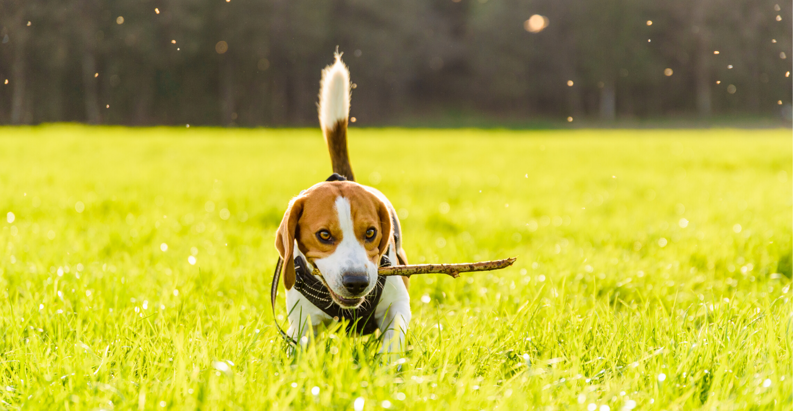 Active Dog Month: Ideas to Keep Your Dog Active