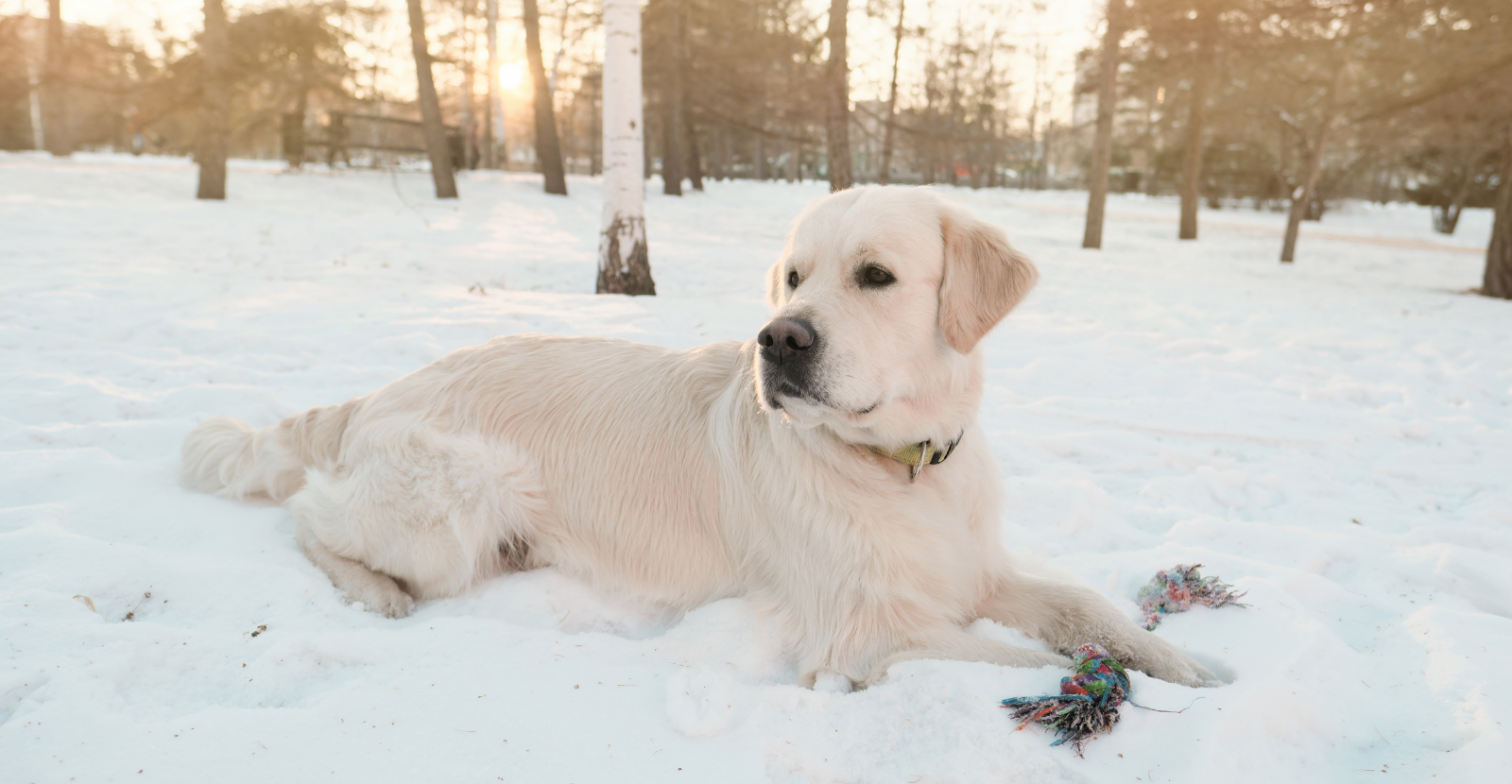 Brrr: 4 Cold Weather Tips for Dogs [Infographic]