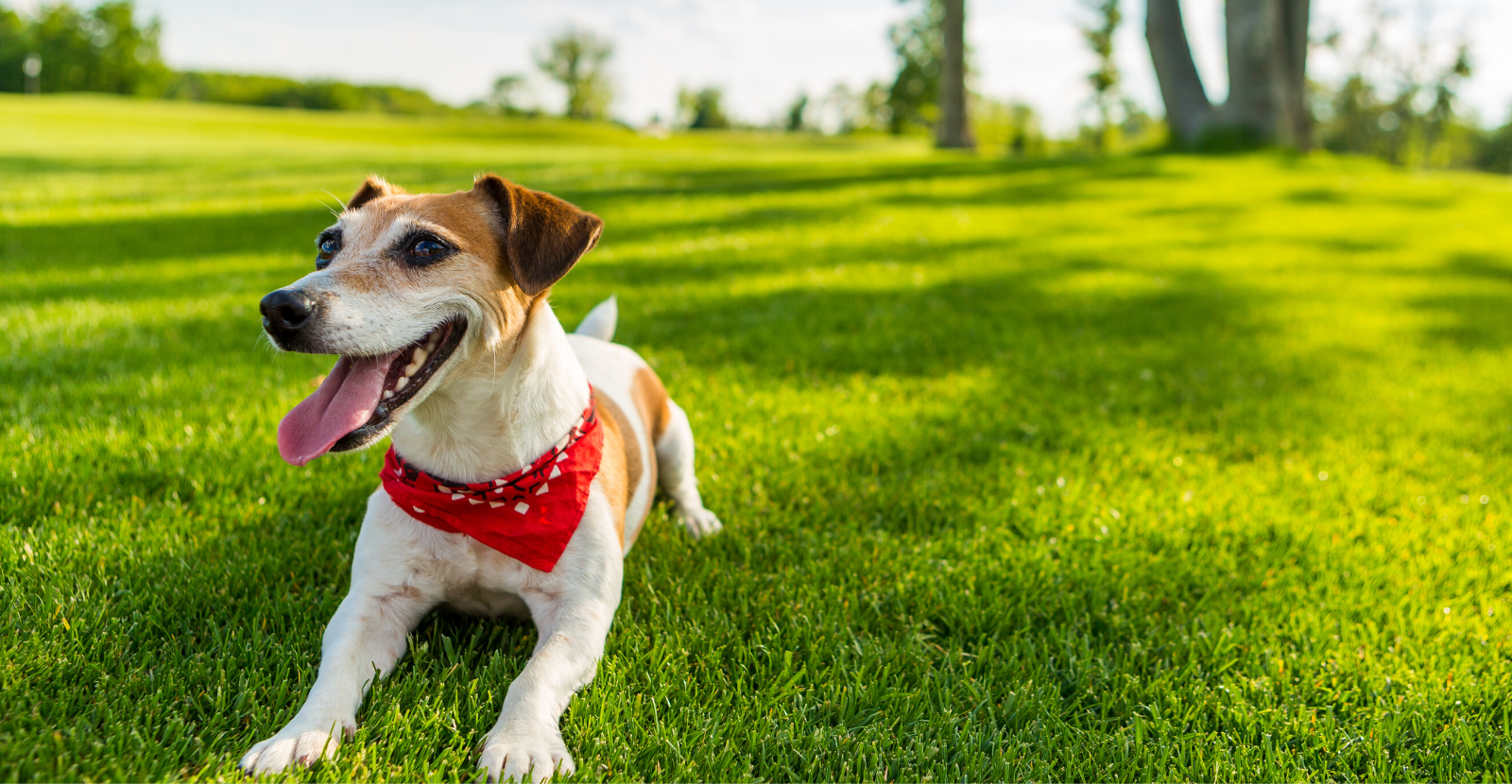 3 Summer Safety Tips Every Dog Parent Should Know