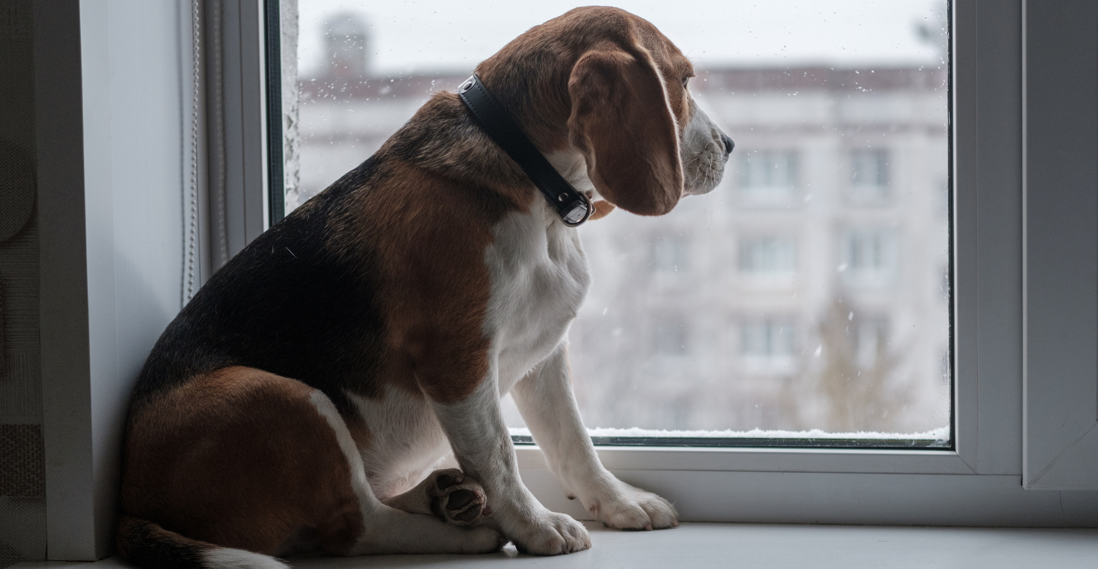 6 Fun Indoor Dog Activities for a Rainy Day