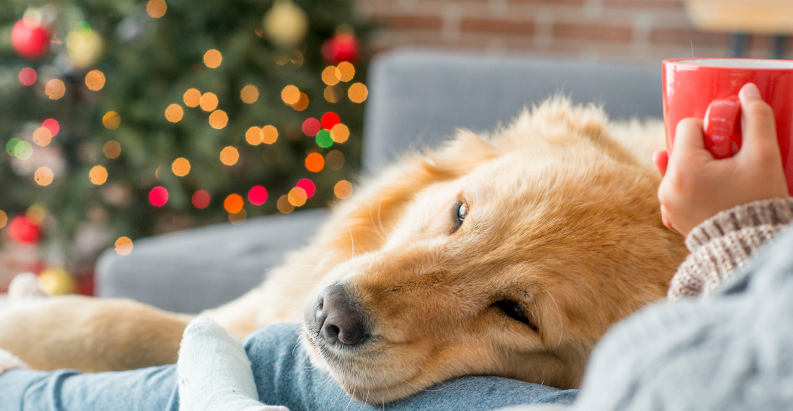 Make the Holidays Special with Your Pet