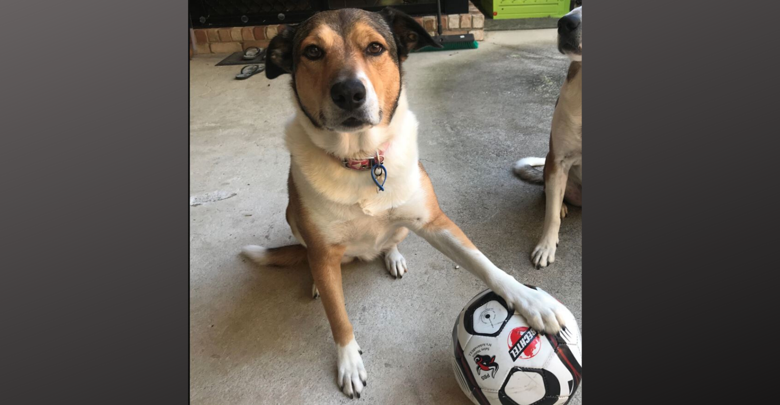 Glyde Gets Soccer Dog Kicking