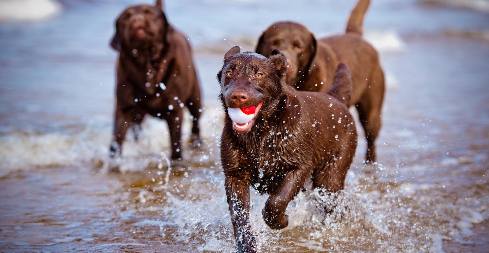 5 Ways to Treat Arthritis in Dogs