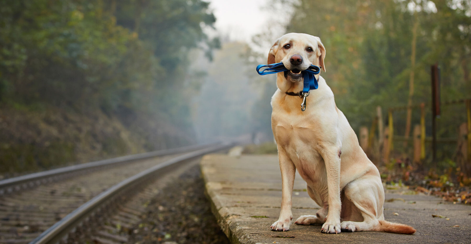 5 Tips to Prevent Your Pet from Being Lost