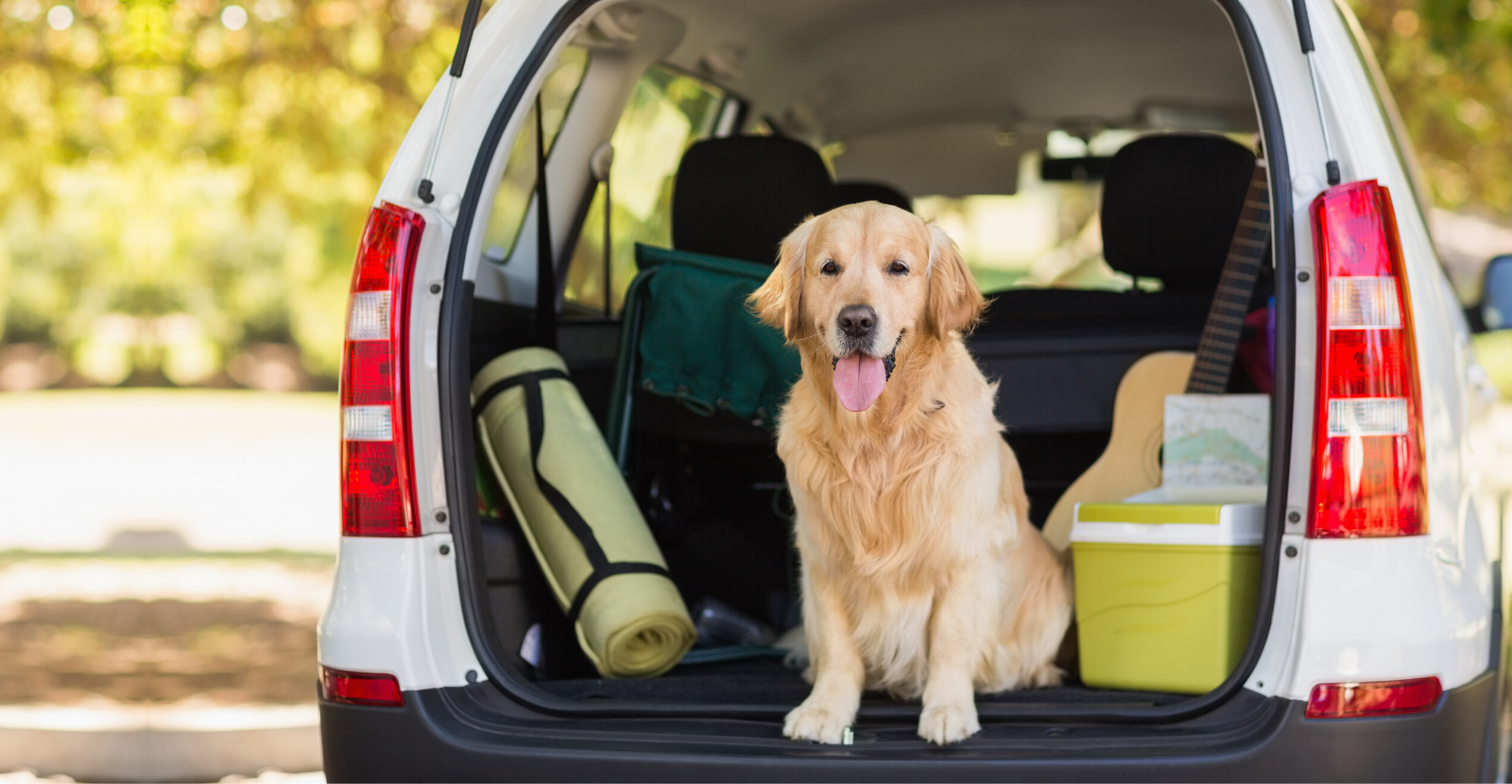 Traveling with Pets: Packing Pointers (Downloadable)