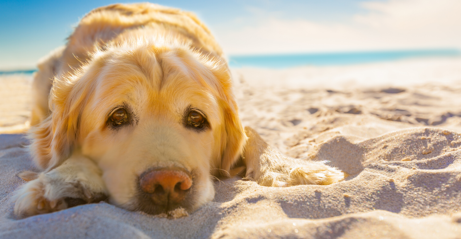 Caring for an Aging Pet on a Budget