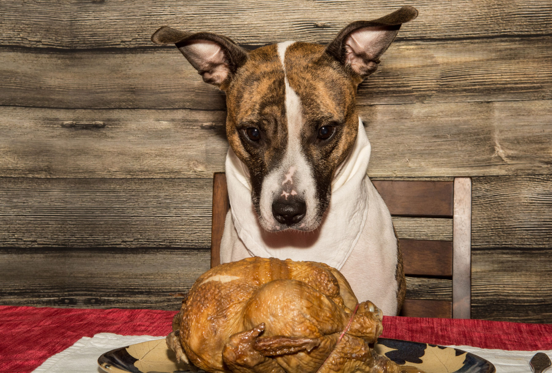 The Perfect Pet Thanksgiving Feast