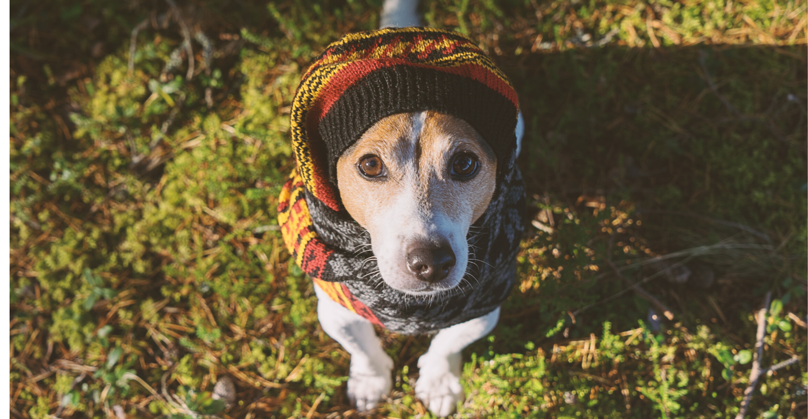 3 Winter Safety Tips Every Dog Parent Should Know